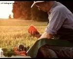 Organic farmer petition mini